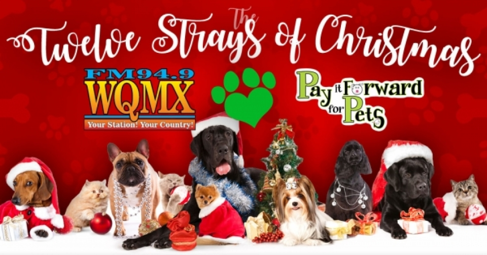 The 12 Strays of Christmas