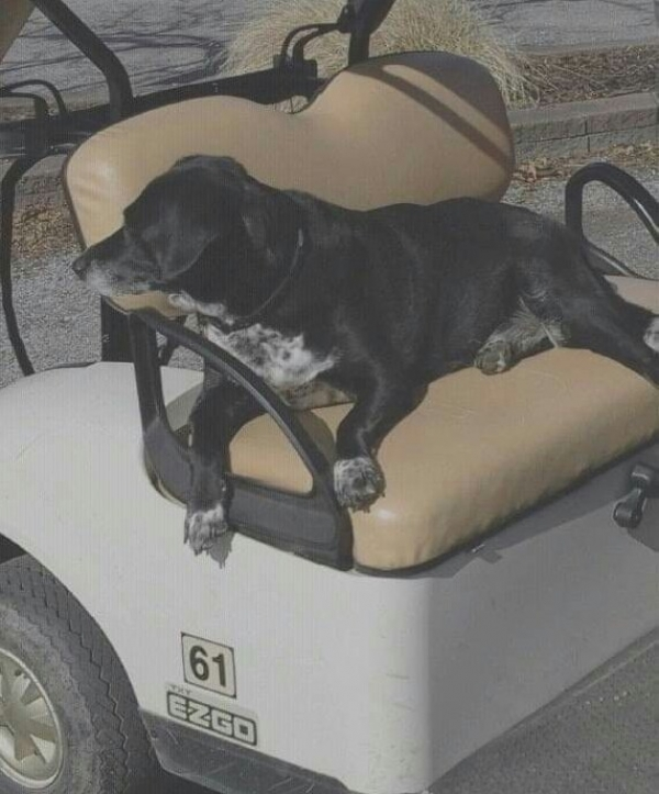 Dog Blog - Lucky Golf Course Dogs!